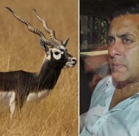 salman-khan-blackbuck-750x500.jpg.pagespeed.ce.JyRfWKjHwK